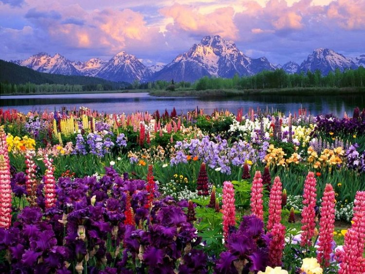 Name:  field of flowers2.jpg Views: 107084 Size:  133.4 KB
