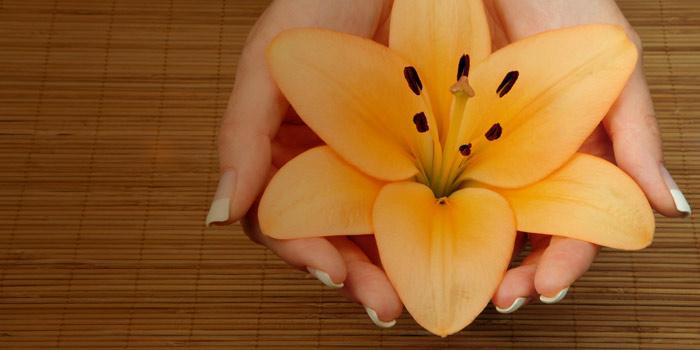 Name:  lily.jpg Views: 1859 Size:  52.4 KB