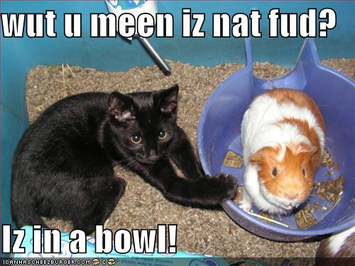 Pics photos cute funny guinea pig names 349