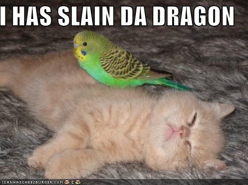 http://www.askmehelpdesk.com/attachments/cats/19350d1241386746-cute-cats-funny-pictures-bird-slays-kitten.jpg
