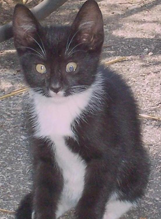 stray kitten with deformed pupil