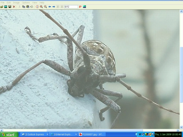Name:  Critter B - Use.jpg