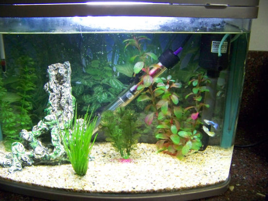 How many fish can i put in this tank for Fish tank riddle