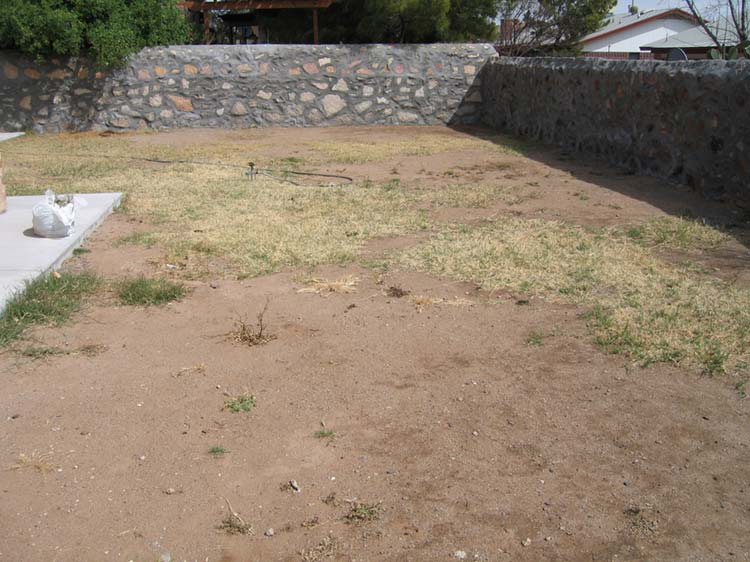 Starting A New Lawn
