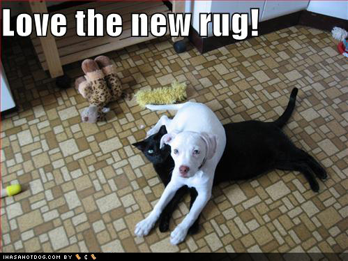 Photo Gallery of Absolute Randomness - Page 3 27100d1259817466-few-funnies-funny-dog-pictures-new-black-cat-rug