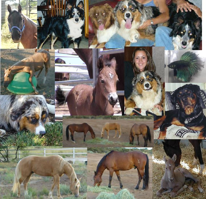 Name:  PetCollage.JPG