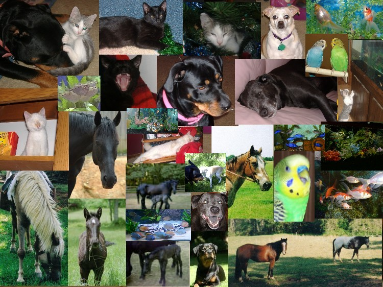 Name:  my animals.JPG Views: 79 Size:  171.6 KB