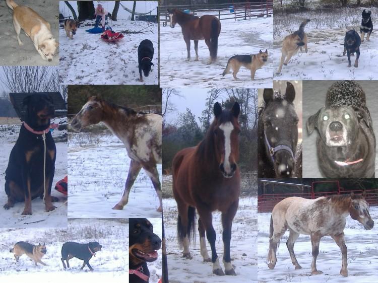 Name:  snow day fun.JPG Views: 56 Size:  146.3 KB